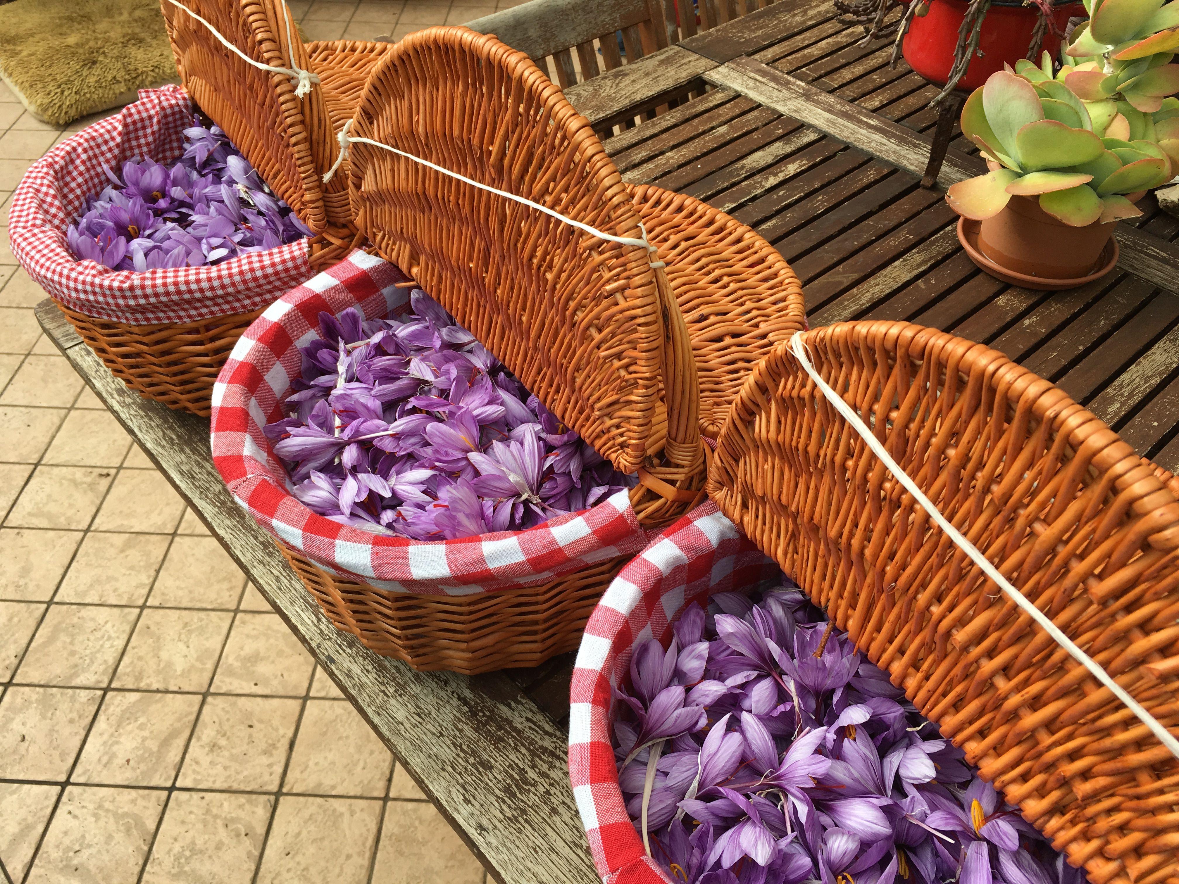 ceste di fiori di zafferano